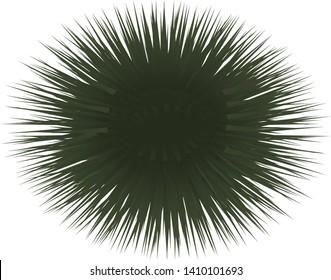 Illustration of the sea urchin