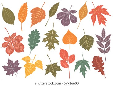 Illustration set of 19 leaves with autumn colors. All objects are isolated and grouped. Colors and transparent background are easy to adjust.
