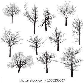 illustration with set of bare trees isolated on white background