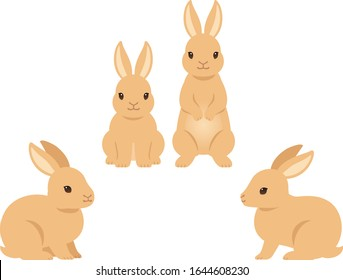 Illustration set of brown rabbits (sitting, standing, side view and front view)