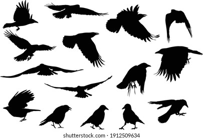 illustration with set of crow silhouettes isolated on white background