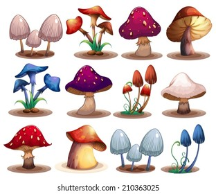 Illustration of a set of different mushrooms