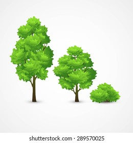 Illustration of a set of different trees. Vector illustration EPS 10