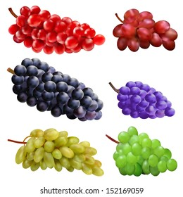illustration set of different varieties of grapes