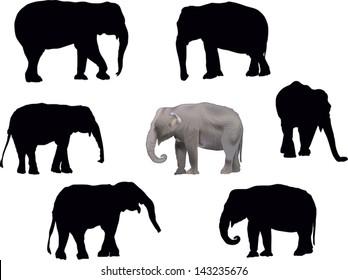 illustration with set of elephants isolated on white background