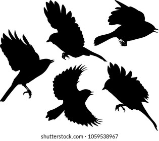 illustration with set of flying birds silhouettes isolated on white background
