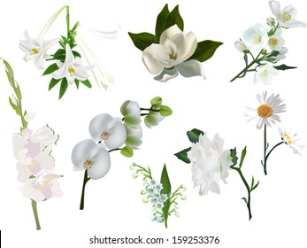 illustration with set of isolated white flowers