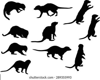 illustration with set of meerkat isolated on white background