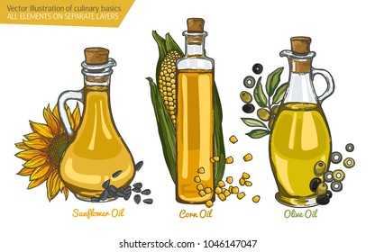 illustration with a set of the most popular cooking oils. Olive oil and olive berries, corn oil and corn cob, sunflower oil and sunflower flower, glass oil vessels.