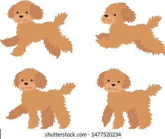 Illustration set of poodle dogs in walking and running poses