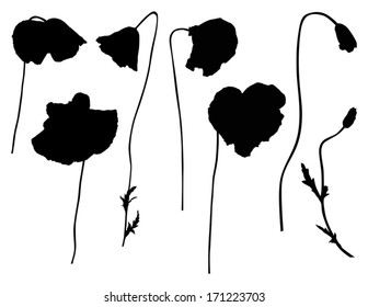 illustration with set of poppy silhouettes isolated on white background