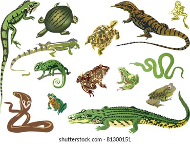 illustration with set of reptiles and amphibians isolated on white background