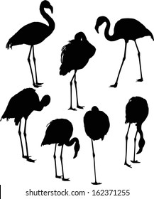 illustration with set of seven flamingo silhouettes isolated on white background