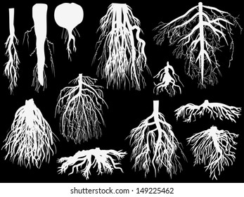 illustration with set of white roots isolated on black background