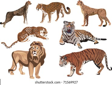 illustration with seven big color cats