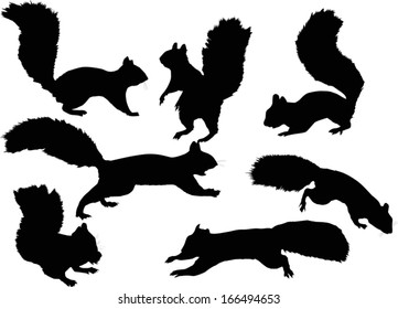 illustration with seven squirrels isolated on white background