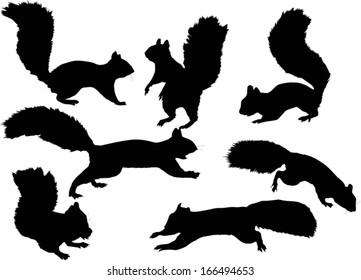 squirrel silhouette images  stock photos   vectors logo vector service logo vectors scratch