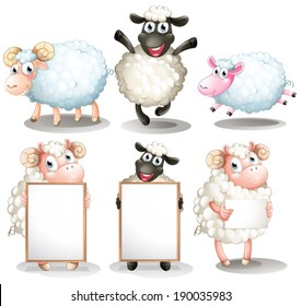 Illustration of the sheeps and lambs with empty boards on a white background