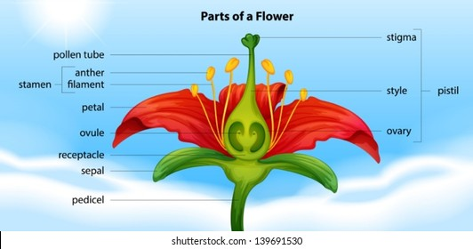 Flower Parts Images Stock Photos Vectors Shutterstock