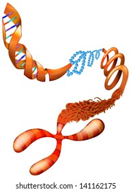 Illustration showing the DNA chromosome