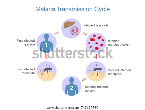 Malaria transmitted sexual contact