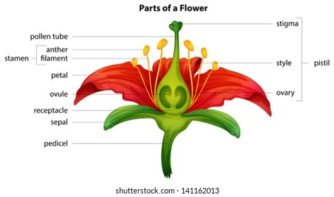 illustration showing the parts of a flower