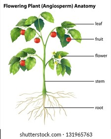 Parts of a tomato flower diagram auto electrical wiring diagram parts of a tomato flower diagram images gallery ccuart Gallery