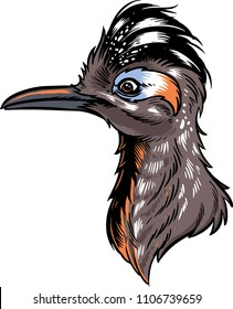 The illustration shows a Roadrunner bird with a long thin beak.