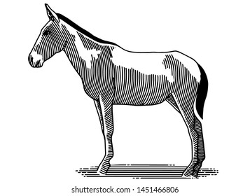 Illustration of the side of a mule standing.