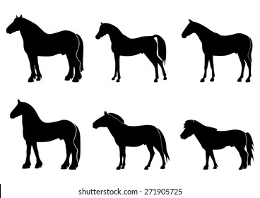 Illustration with silhouettes of horses of different breeds