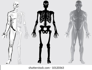 illustration with silhouettes of human skeleton