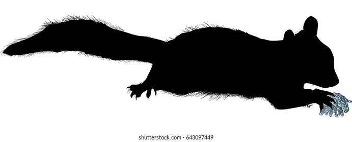 illustration with single squirrel sketch isolated on white background