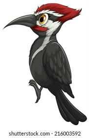 Illustration of a single woodpecker