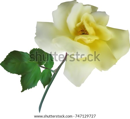 Illustration Single Yellow Rose Flower Isolated Stock Vector