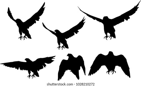 illustration with six hawk silhouettes isolated on white background
