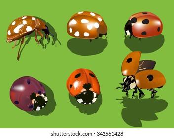 illustration with six ladybugs isolated on green background