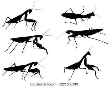 illustration with six mantids silhouettes isolated on white background