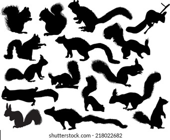 illustration with sixteen squirrels isolated on white background