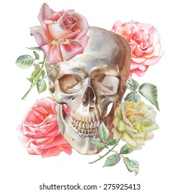Illustration with skull and roses. Watercolor. Vector. Hand drawn.