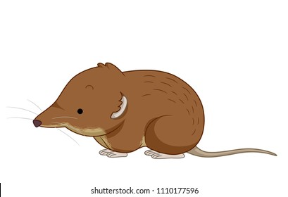 Illustration of a Small, Brown Shrew