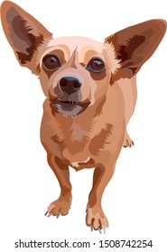 Illustration of small dog of a smooth-haired and large-eyed. Chihuahua. Vector, EPS10