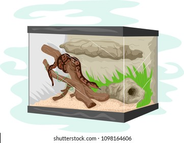 Illustration of a Snake Inside a Terrarium