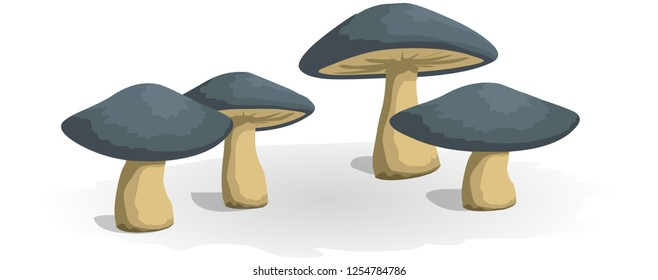 Illustration of some fly mushrooms in front of white background, panorama Cartoon mushroom icon. Wild forest mushrooms in autumn, isolated vector illustration - Abstract vector icon illustration