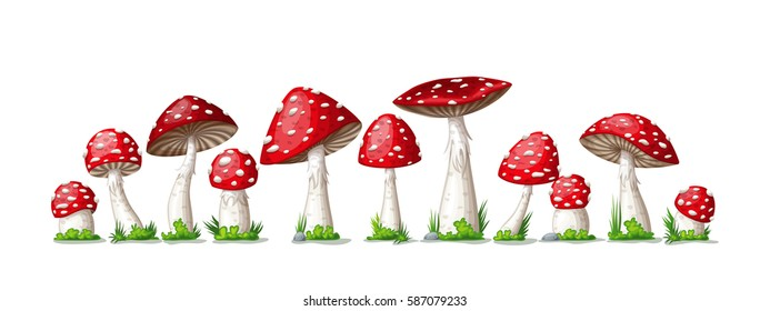 Illustration of some fly mushrooms in front of white background, panoama