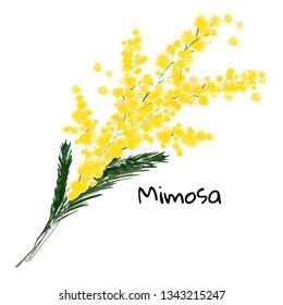 Illustration a spring mimosa flower