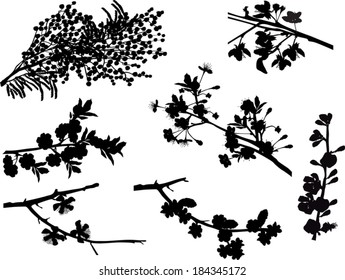 illustration with spring tree blossom branches isolated on white background