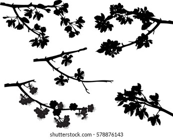 illustration with spring tree blossom branches collection isolated on white background