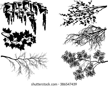 illustration with spring tree branches isolated on transparent background