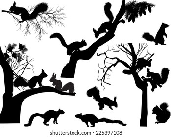 illustration with squirrels isolated on white background