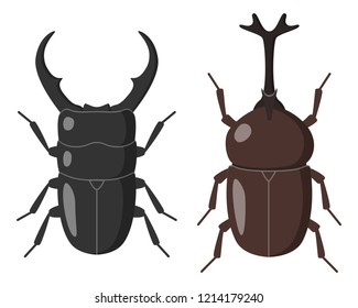 Illustration of Stag beetle and Japanese horned beetle.